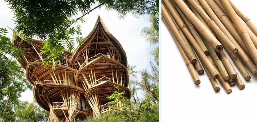 خانه های جنگلی بامبو